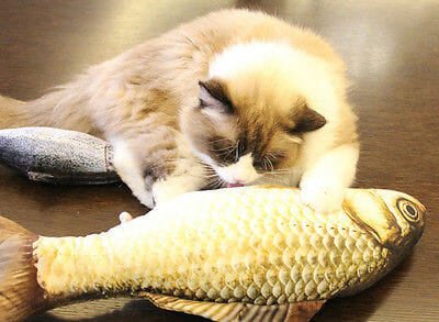 Funny Lifelike Fish Shape Pet Cat Kitten Teaser Cute Simulation Fish Playing Toy Catnip Toy Pillow 5